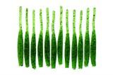 Мягкая Приманка Hart RSF Slim Worm 2,0-50мм цвет GSG 12шт/уп